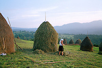 ROMANIA / Maramures / Breb / September 2006..Haymaking in the small village of Breb...© Davin Ellicson / Anzenberger.