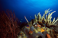 Trumpetfish amidst Soft Corals