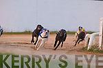 Action from Tralee Greyhound stadium on Saturday night.