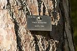 Tree species identification label, National arboretum, Westonbirt arboretum, Gloucestershire, England, UK - Pinus Sylvestris, Scots Pine