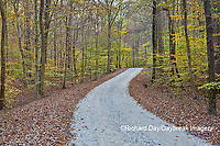 63895-14416 Road in fall at LaRue-Pine Hills in Shawnee National Forest, IL