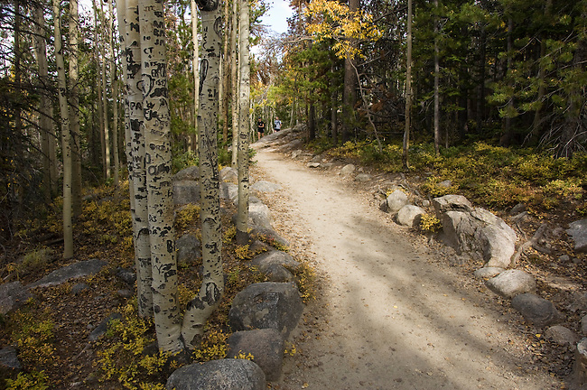 vandalism, graffiti, aspen, trunks, Populus tremuloides, hiking trail, trees, forest, landscape, scenic, Rocky Mountain National Park, Colorado, Rocky Mountains, USA