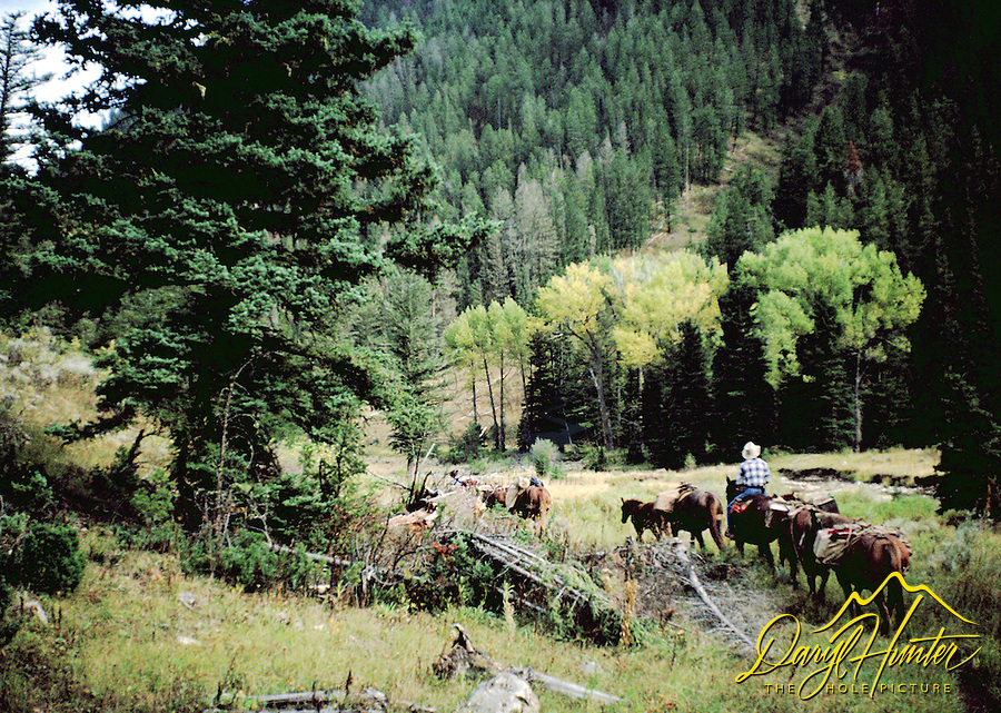 Cowboys, pack string, Bridger Teton National Forest, Jackson Hole, Wyoming