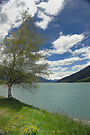 Tree, sky and lake. Lake Resia, Italian/ Austrian border.
