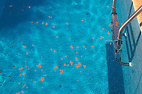 A blue pool with lots of leaves and other things floating on the surface of the water. Clos des Iles Le Brusc Six Fours Cote d'Azur Var France