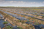 Empty tomato fields after the harvest in Florida City.