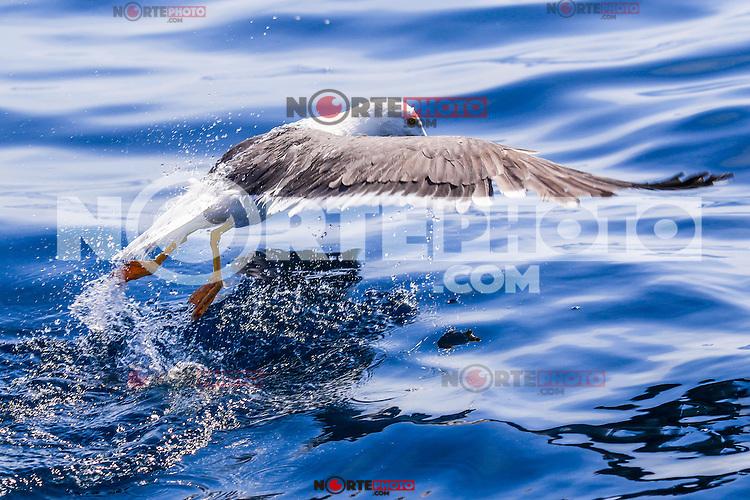 Recorrido por la Isla San Pedro Nolasco que forma parte Sonora en el Golfo de California   <br /> Foto: LuisGutierrez/NortePhoto.com