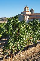 Hotel Castilla Termal Monastery of Valbuena, vineyard of Tempranillo grapes, ribera del Duero wine production, Valladolid,  Spain
