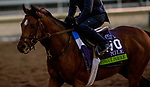 October 30, 2019: Breeders' Cup Mile entrant Without Parole, trained by Chad C. Brown, exercises in preparation for the Breeders' Cup World Championships at Santa Anita Park in Arcadia, California on October 30, 2019. Michael McInally/Eclipse Sportswire/Breeders' Cup/CSM