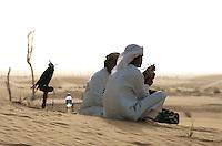 Bab al Shams, Jagdfalke, Dubai, Vereinigte arabische Emirate (VAE, UAE)