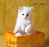Marek, ANIMALS, REALISTISCHE TIERE, ANIMALES REALISTICOS, cats, photos+++++,PLMP2626,#a#