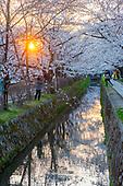 Kyoto - chemin des philosophes