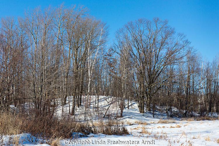 Winter in the northwoods