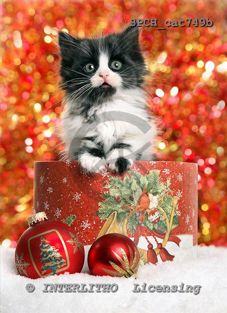 Xavier, CHRISTMAS ANIMALS, photos+++++,SPCHCAT749B,#xa#