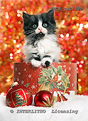 Xavier, CHRISTMAS ANIMALS, photos+++++,SPCHCAT749B,#xa#