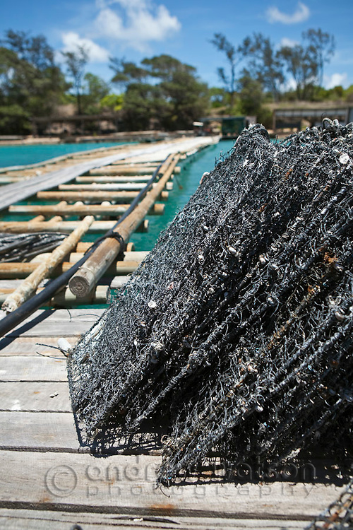 Pearl oyster cages at Kazu Pearls.  The pearl farm is one of the last in the Torres Strait, growing and harvesting cultured pearls.  Friday Island, Torres Strait Islands, Queensland, Australia