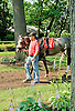 Win Willy before The Cape Henlopen Stakes at Delaware Park on 6/28/12