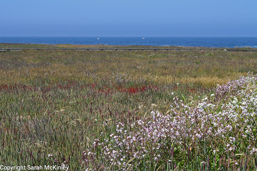 The boardwalk at MacKerricher state park runs along the edge of a wildflower covered bluff overlooking the blue waters of the Pacific ocean near Fort Bragg in Mendocino County in Northern California.