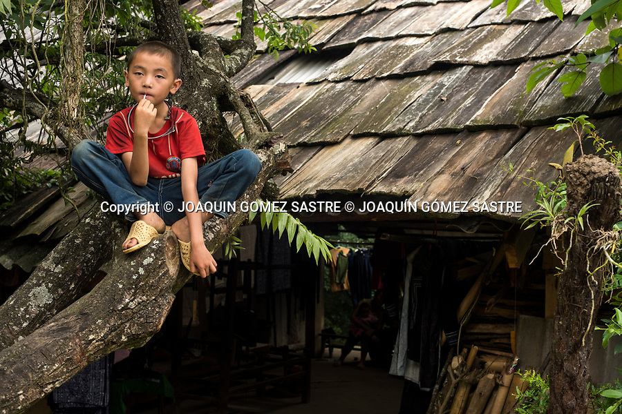 A child from the ethnic group Hmong climbed a tree in the Cat Cat village in the northern part of Vietnam near the slopes and terraces where they grow rice and raise livestock.