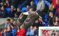 Bald Eagle Kayla during the EPL - Premier League match between Crystal Palace and Liverpool at Selhurst Park, London, England on 29 October 2016. Photo by Steve McCarthy.