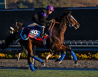 Dank , trained by Sir Michael Stoute, trains for the Breeders' Cup Filly & Mare Turf at Santa Anita Park in Arcadia, California on October 30, 2013.
