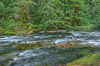 ORCAN_D211 - USA, Oregon, Mount Hood National Forest, Salmon-Huckleberry Wilderness, Salmon River, a federally designated Wild and Scenic River and surrounding forest.