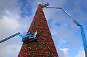 10/11/12 ..Photo shows: The star is put on the tree...<br />