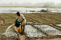 NIGER Zinder, Dorf Zongon Soumaguela, Bewaesserung eines Gemuesegartens aus einem angelegten Wasser Reservoir / NIGER Zinder, village Zongon Soumaguela, irrigation of vegetable garden from water pond , MORE PICTURES ON THIS SUBJECT AVAILABLE!!