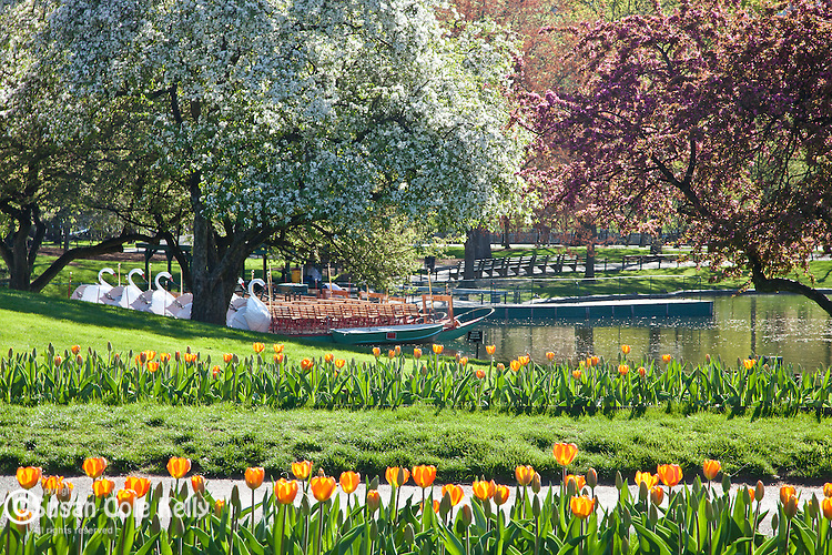 Springtime in the BostonPublic Garden, Boston, MA, USA