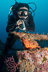 DM Bobby @Marco Vincent with Scorpion fish, Marco Vincent, Philippines, Puerta Galera, Verde Islands, Wreck of the Alma Jane