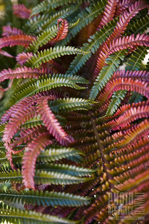 Tropical Hawaiian ferns