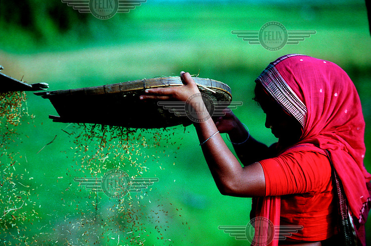 A woman separates rice from husks using a traditional sieving implement.