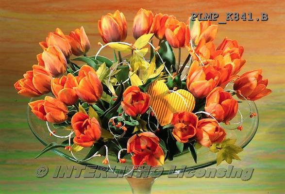 Marek, FLOWERS, BLUMEN, FLORES, photos+++++,PLMPK841,#f#