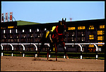 A jockeyless horse crosses the finish line at San Ysidro Racetrack.