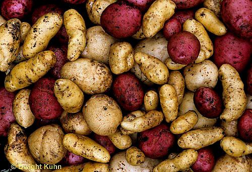 HS69-059e  Potatoes - varieties