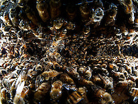 Multitude betwen honeycombs