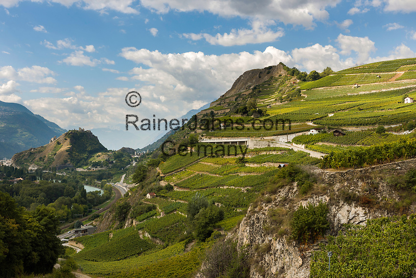 Switzerland, Canton Valais, Sion: wine growing in Rhône Valley | Schweiz, Kanton Wallis, Sion (Sitten): Weinanbau im Rhonetal