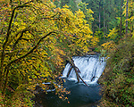 Silver Falls State Park, OR: Lower North Falls (30 ft) in Silver Creek Canyon in fall