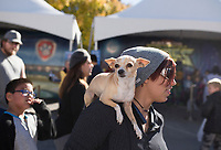NWA Democrat-Gazette/CHARLIE KAIJO Santiago, the chihuahua, rests on the shoulder of Monica Sermenho of Tulsa, Okla., Friday, November 1, 2019 during the First Friday Toyland at the downtown square in Bentonville.<br /> <br /> The theme of this month's First Friday block party is Toyland. Kids had the opportunity to try out the latest toys.