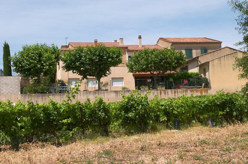 vineyard chateauneuf du pape rhone france