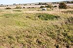 Richardson deserted medieval village, Berwick Bassett, Wiltshire, England, UK