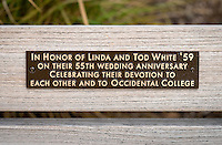 Benches dedicated to Linda and Tod White '59 in Mullin Grove at the main entrance to Occidental College. Dec. 15, 2016.<br /> (Photo by Marc Campos, Occidental College Photographer)