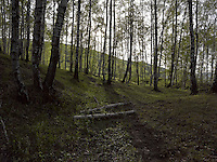 FOREST_LOCATION_90062