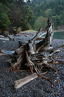 Driftwood, Deadman Cove, San Juan Island, Washington, US
