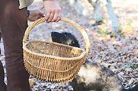 Hugues Martin, the owner of the truffles farm with a wicker basket to collect the truffles Truffiere de la Bergerie (Truffière) truffles farm Ste Foy de Longas Dordogne France