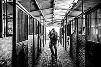 Horse trainer Mustafa, 21,  carries an un-named,  4 day old filly back to the stables at the Al-Obeid Stud on June 07, 2016 near the village of Abu Kash, in the West Bank, Israeli-occupied territories. <br /> Photo Daniel Berehulak for the New York Times