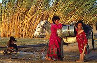 Syria, El Haseke, Sept. 1989..Young girls with donkey for water transport in the far North East of Syria....Jong meisjes met ezel in gebruik voor water transport in het verre Noord-Oosten van Syrie...Photo  Kees Metselaar