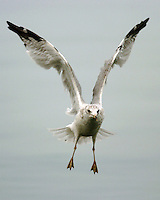 Seagull, New York. Testing the speed and lousy image quality of a D-2H.