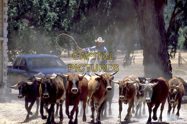 LORENZO LAMAS.in Hope Ranch.Filmstill - Editorial Use Only.Ref: FB.www.capitalpictures.com.sales@capitalpictures.com.Supplied By Capital Pictures.