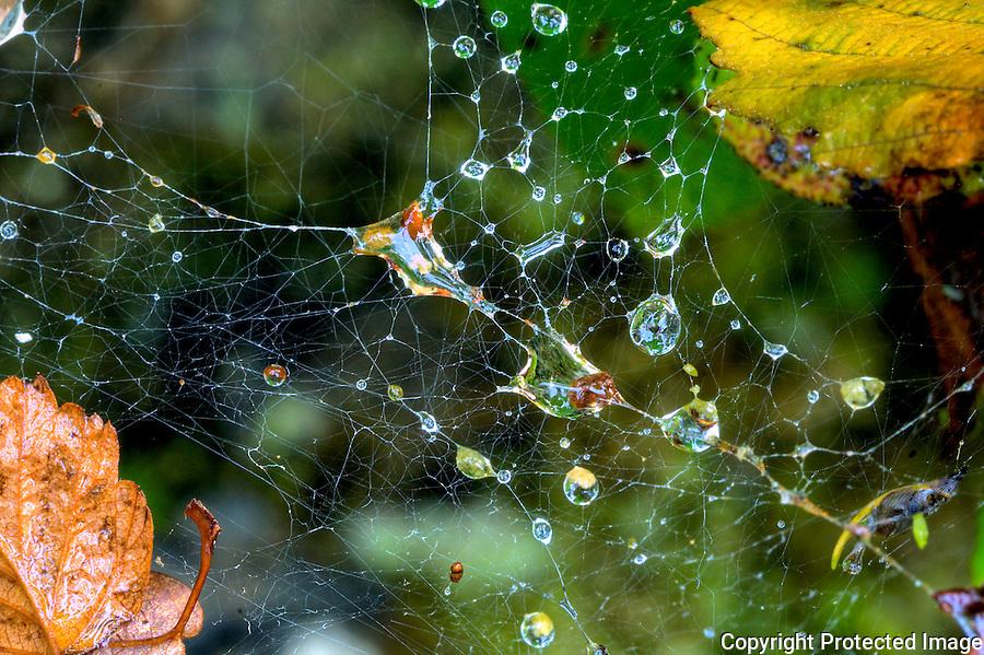 Spider Web in Rainforest